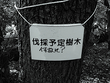 伐採予定樹木