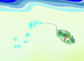 微生物絵本:ミドリムシ