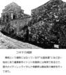 千年巫女の代理人 コキテカ城