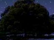 """夜の""""はじまり""""の木。"""
