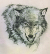 wolf up