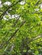 リベンジ 古代蓮、『花の気持ち』の後追い取材