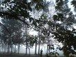散策 街路樹 霧 002