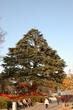 【私の王子様】中山競馬場のクリスマスツリー