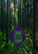 シレイラの森に浮かぶ転移魔法陣