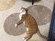 魔王、猫になる。第41話 挿絵4