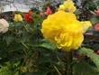 花12植物公園