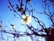 雪解けの花。