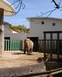 ズゼさん@王子動物園