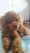 ボッサボサのウチの犬