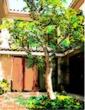 千年巫女の代理人 シスネロスの中庭