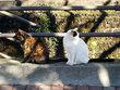 猫溜まりの風景