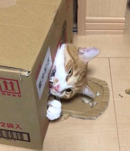魔王、猫になる。第14話 挿絵1