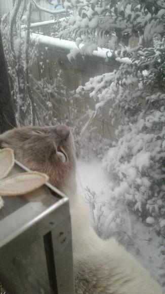 雪を見るムー