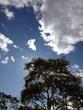 空というキャンパスに絵を描こう!