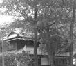 木々に埋もれる屋敷