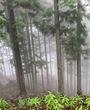 霧中登山(未遂)
