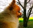 お花見犬!