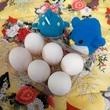 アデリーとジンベーと生卵