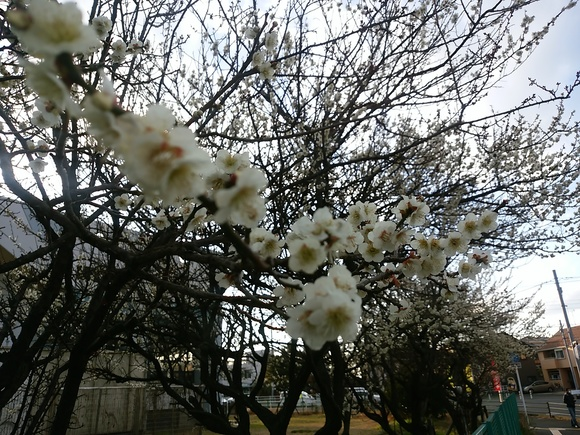春の予感 2