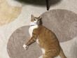 魔王、猫になる。第41話 挿絵5