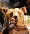 熊 2 冬童話用