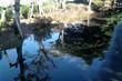 白堊の魚、侏羅の鳥。挿絵(写真)
