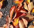 秋:落葉①