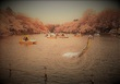蓬莱池のホッシー