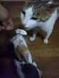 ぷー太郎とミケコ(アイス)