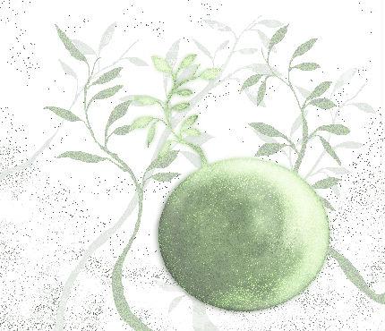 胞子と球根