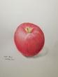 色鉛筆 リンゴのデッサン