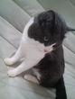 よくいる柄の猫