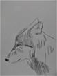 イケメン横顔オオカミ。