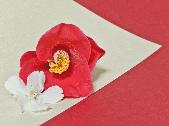 【フリー素材】椿と桜