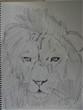 黒い動物シリーズ! ライオン。