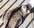 魚市場の猫2