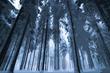 ケモミミ添乗員さん - 雹の森