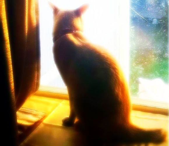 うちの猫・窓辺