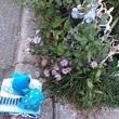 アデリーとジンベーと花