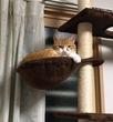 魔王、猫になる。 第39話 挿絵2