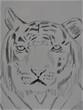 トラとら虎?