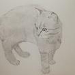 モノクロデッサン練習 銘水さんの猫ちゃん