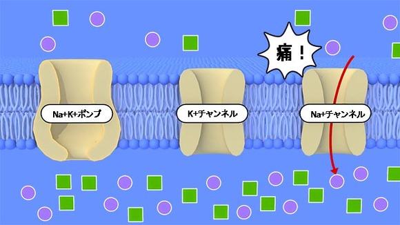 shinkei_kijyo001aです