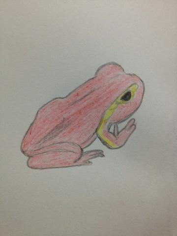 赤いカエル。
