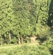 裏山への通り道
