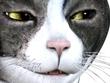 野獣の眼光