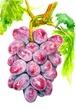 農産物~ブドウ