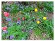 お蔵出し怪異譚用写真・庭の花