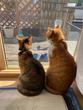 【猫写真あり】魔王、猫になる。〜魔王さまのほのぼの世界征服ライフ